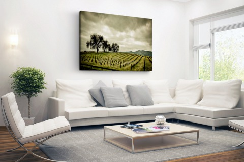 Vroege wijngaarden in de Napa Valley Canvas