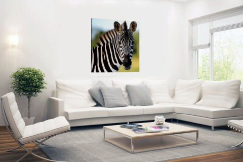 Zebra in Afrika Canvas