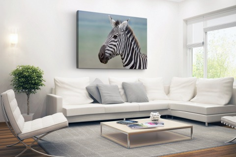 Zebra portret fotoprint Canvas