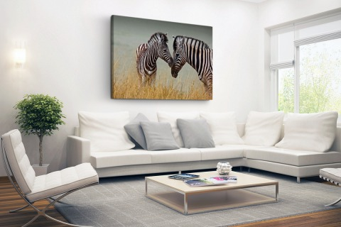 Zebras fotoprint Canvas