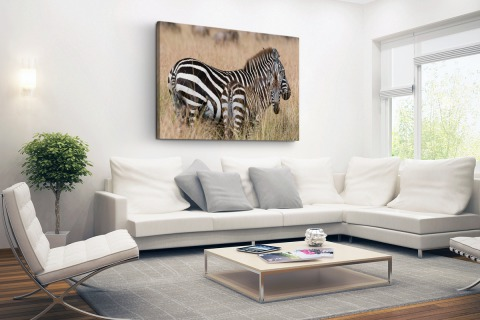 Zebras in de natuur Canvas
