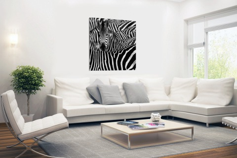 Zebra zwart-wit fotoprint Canvas